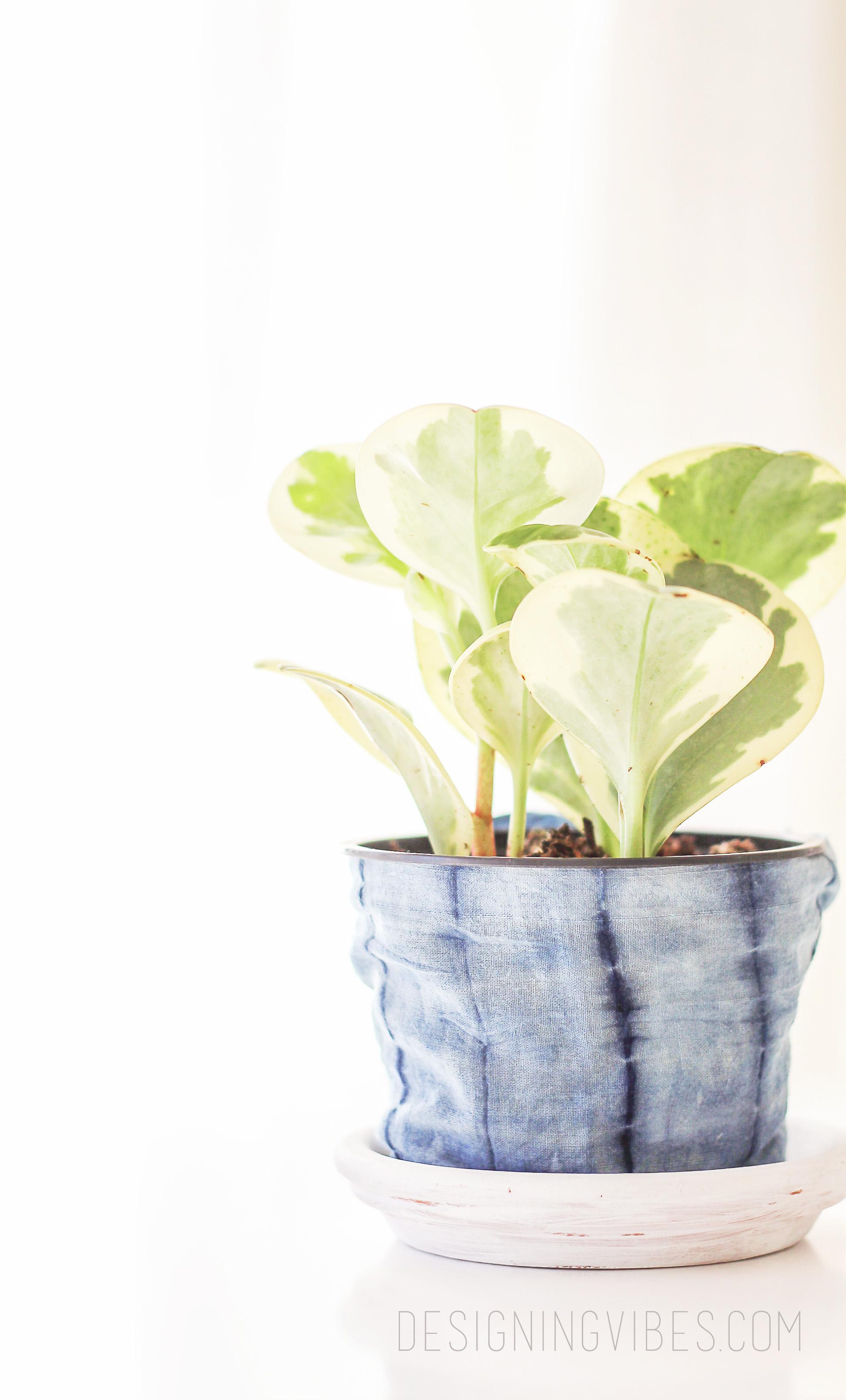 No-Sew Fabric Shibori Planter DIY
